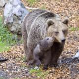 Ljubljana-Zoo